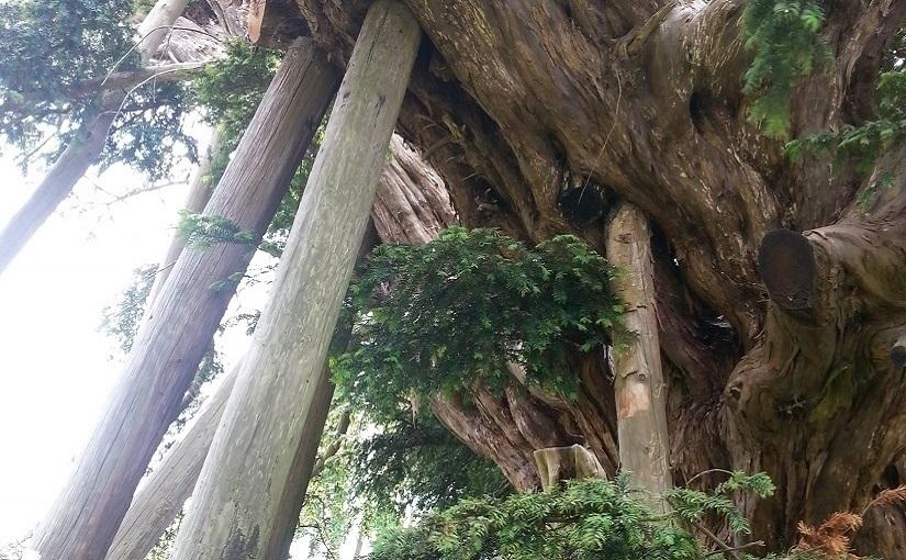 EbbSpark Yew image