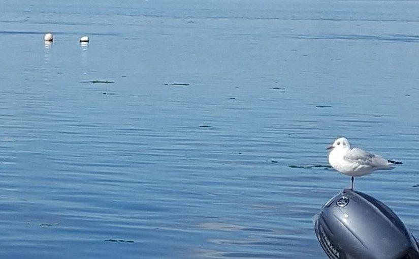 EbbSpark Seagull image