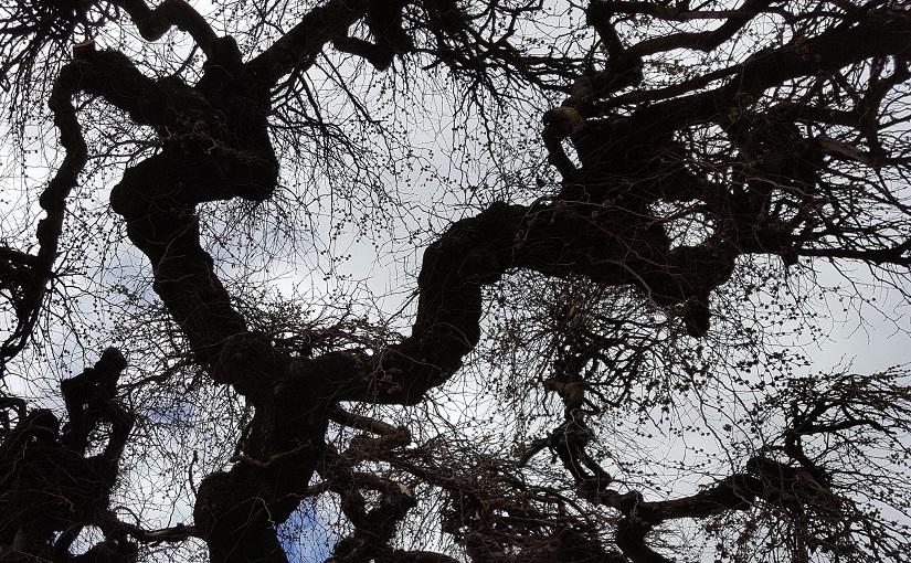 EbbSpark Elm image
