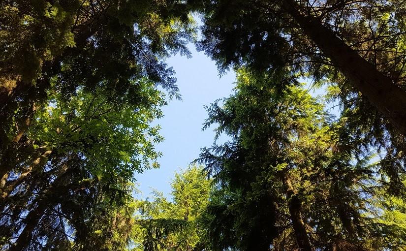 EbbSpark Canopies image