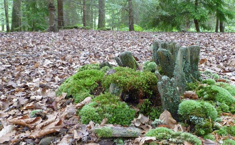 EbbSpark ForestStories image