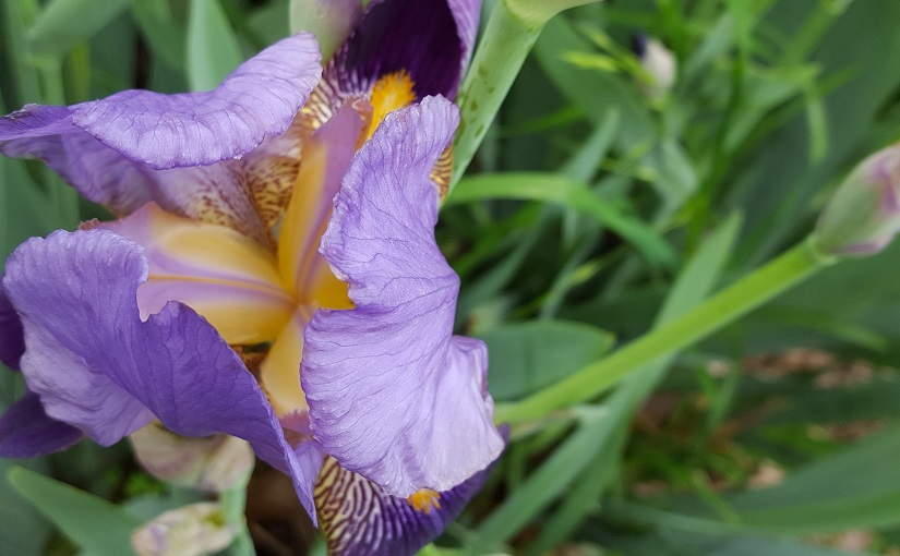 EbbSpark Iris image