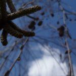 EbbSpark Birch Sky image