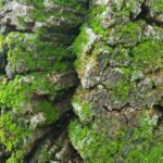 EbbSpark Green Bark image