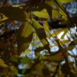 EbbSpark Leaf Drama image