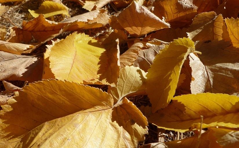 Golden autumn leaves on ground