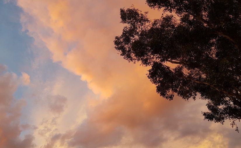 Tall Gum tree against cloudy pastel sky