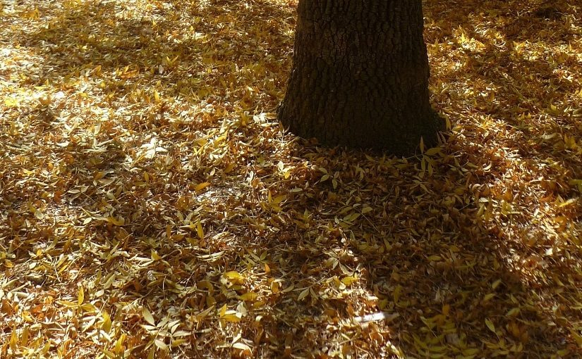 Tree trunk with fallen autumn leaves
