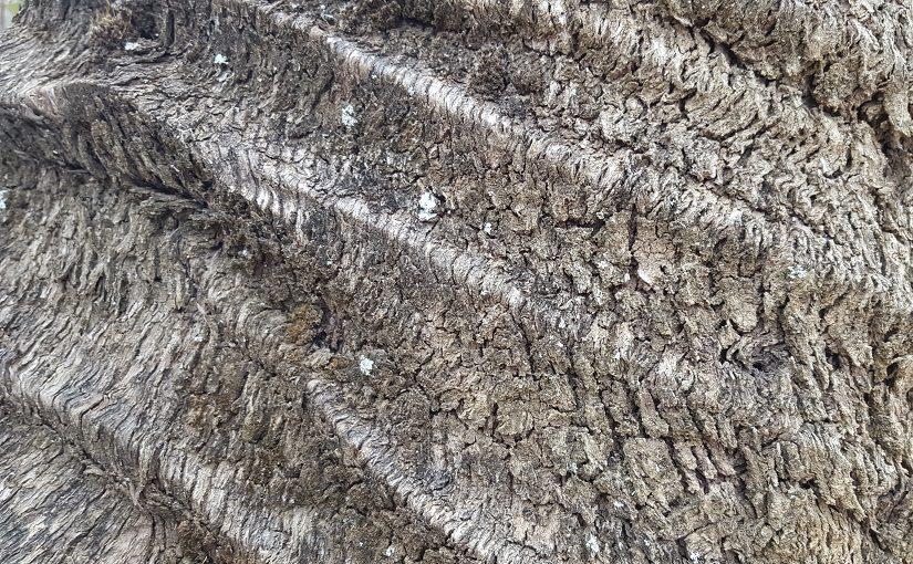 Ridged bark of a tree