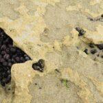 Mussels sheltering in rocks on beach
