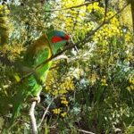 Parrot within colourful foliage