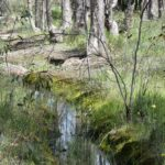 Winding trail behind woodland stream
