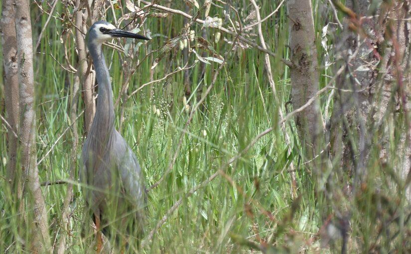 Heron standing by the waterside