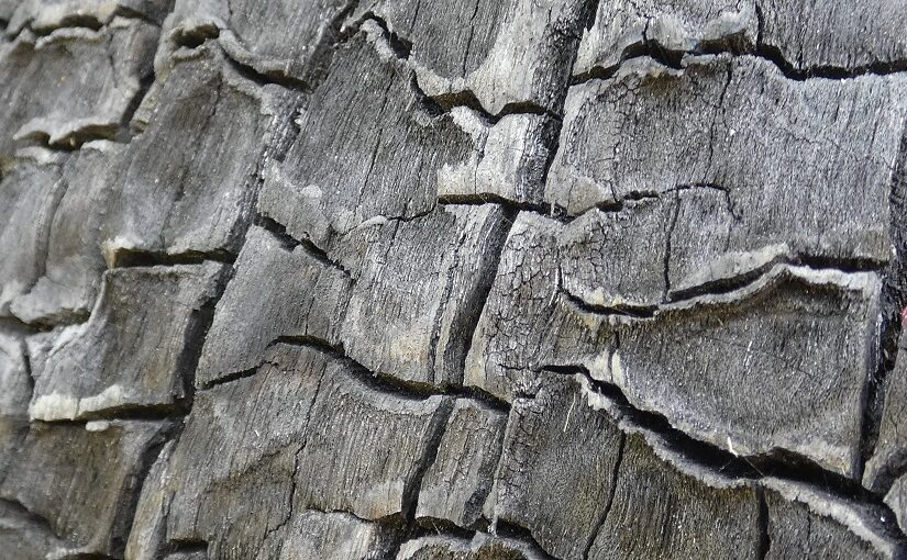 Cracks on a charred tree trunk