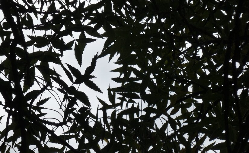 Leaves silhouetted against pale blue sky