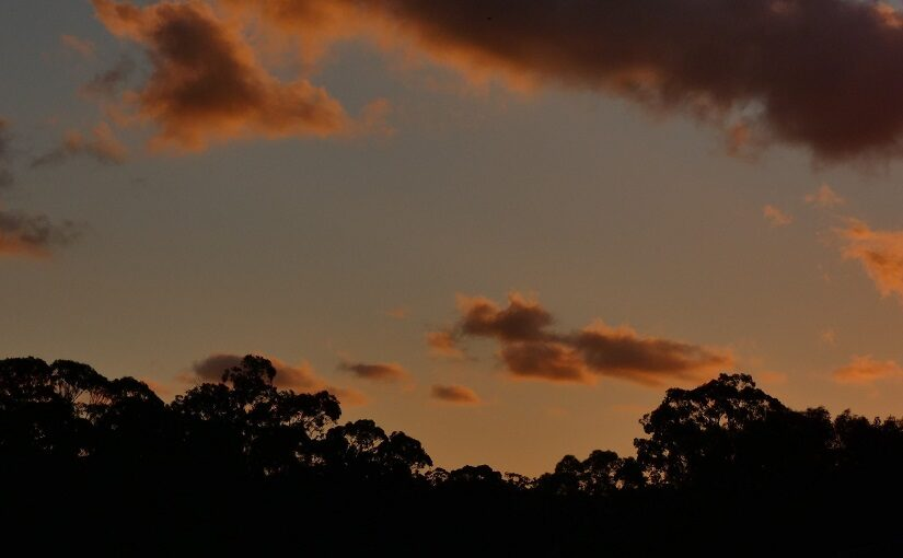 Clouds echoing silhouetted tree line against a sunset sky