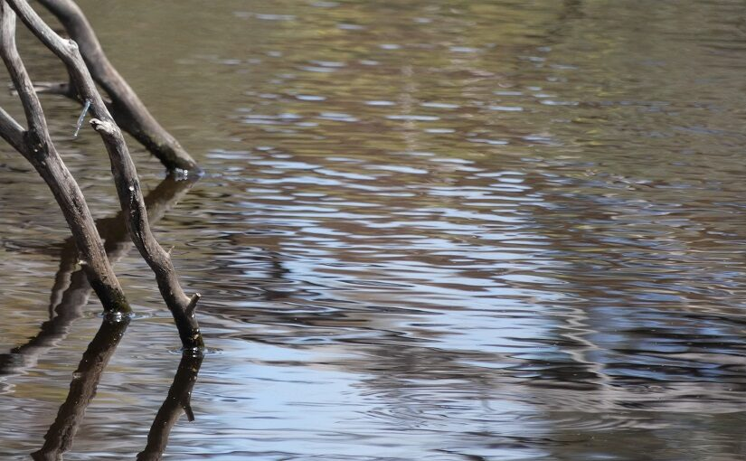 Sticks reflected in a rippling pond